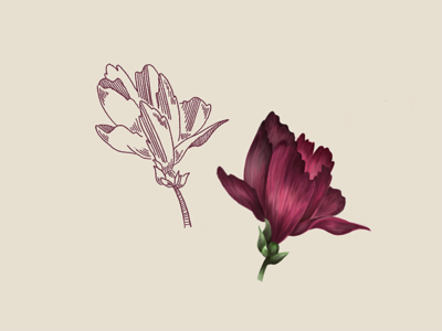 flowers in two flavours sketch floral illustration