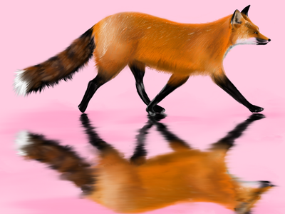 Fox trot animal colour procreate reflection illustration fox