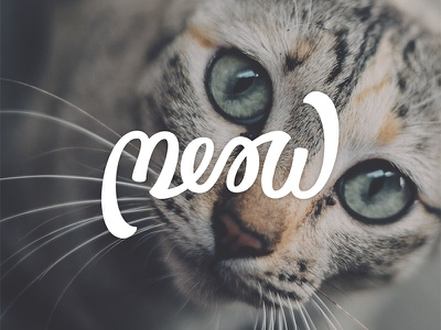 Meow brushscript ambigram cats bezier curves vector lettering typography calligraphy brush hand lettering