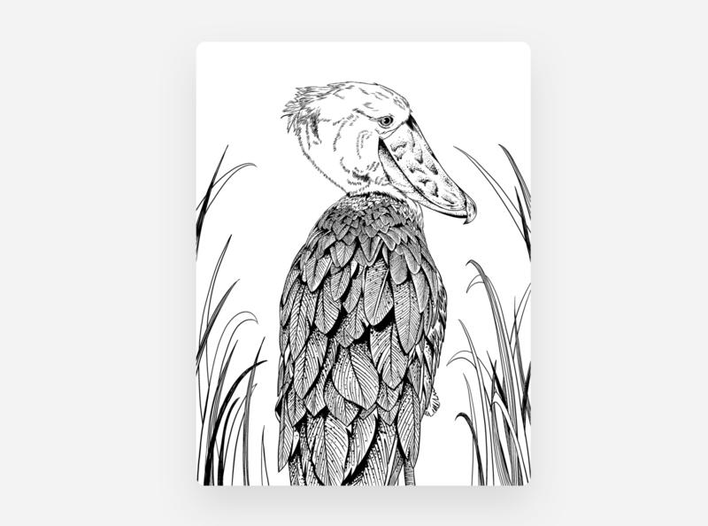Bird illustration hern wader heron kind nature graphic art illustration bird shoebill