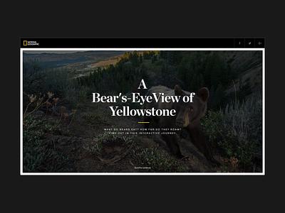 A Bear's Eye View of Yellowstone - Landing webgl ux bear natural natgeo ui design hello monday web uiux