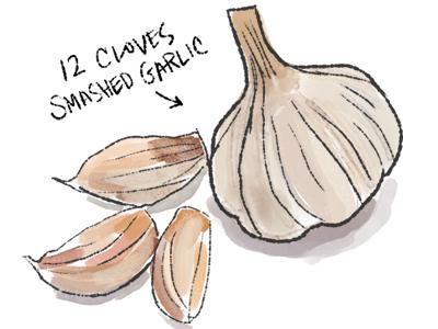 Garlic illustration cooking food