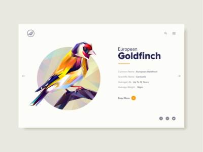 European Goldfinch bird goldfinch european ui landing page information illustration slider low poly ux