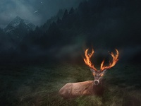 Burning Deer