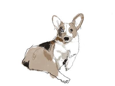 Minna corgi sketches animal cute illustraion simple procreate sketch dog corgi