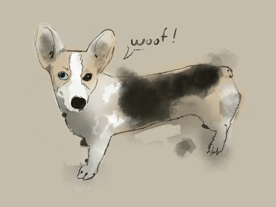 Another corgi sketch procreate illustraion dog corgi