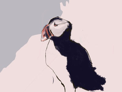 Puffin procreateapp digital painting bird illustration procreate painting puffin