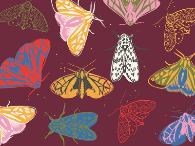 Moths fall bugs moths
