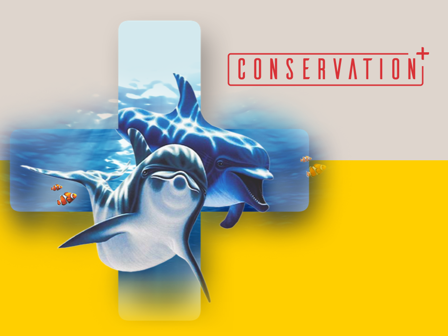 Conservation+ Brand Exploration conservation save the animals brand exploration brand assets brand and identity brand