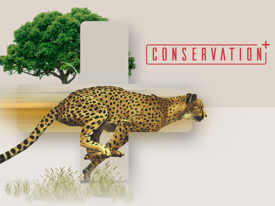 Conservation+ Brand Exploration zoo animal conservation logo type brand exploration branding brand brand assets