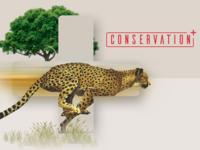 Conservation+ Brand Exploration