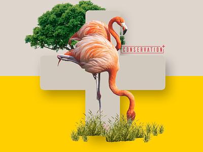 Conservation+ Brand Exploration #4 zoo wildlife branding brand exploration brand and identity brand assets brand
