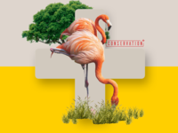 Conservation+ Brand Exploration #4