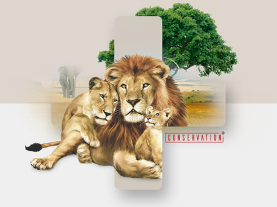 Conservation+ Brand Exploration #5 plus lion charity zoo wildlife branding brand and identity brand assets brand
