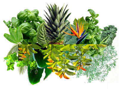 Eat Your Greens plants photoshop illustration