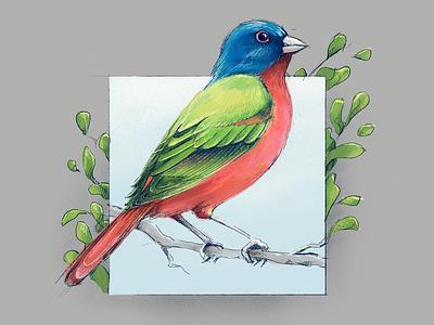 Painting - Painted Bunting green painted bunting bird procreate ipad apple pencil drawing illustration