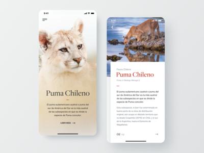 Editorial App Concept minimal clean puma editorial mobile