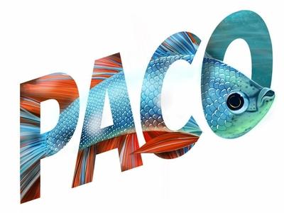 Beta Fish Paco