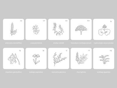 Pollen | Botanical Illustrations app illustration icon