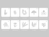 Pollen | Botanical Illustrations