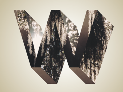 Phreaky Photo-Letters: W for Willow Tree