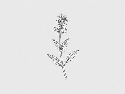 Floral — Illustration