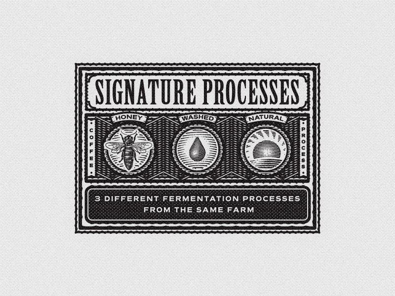 Signature graphic