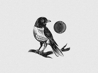 Canadian Robin