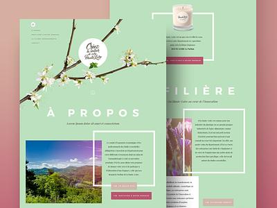 PHL Homepage art direction webdesign