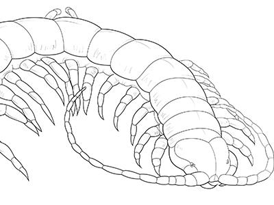 Creepy Crawlies arachnid arthropod insect illustration vector