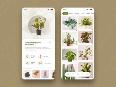 Plant- App Concept