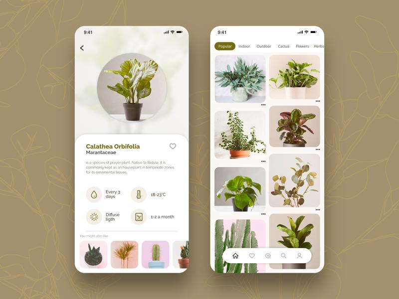 Plant- App Concept adobe xd info card gallery app gallery plants uiux ui concept nature app plant app ui inspo app inspo app design design ui