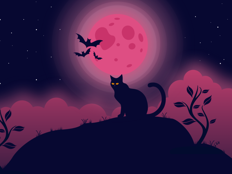 Cat character minimal dribbble best shot night moon cat ui vector illustration dribbble characterdesign 2d illustration 2dcharater