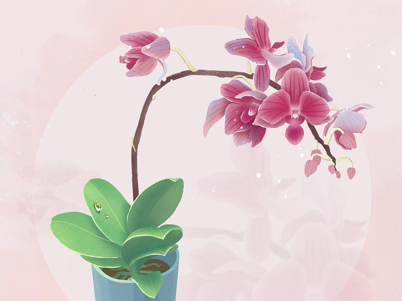 flower flower logo illustration