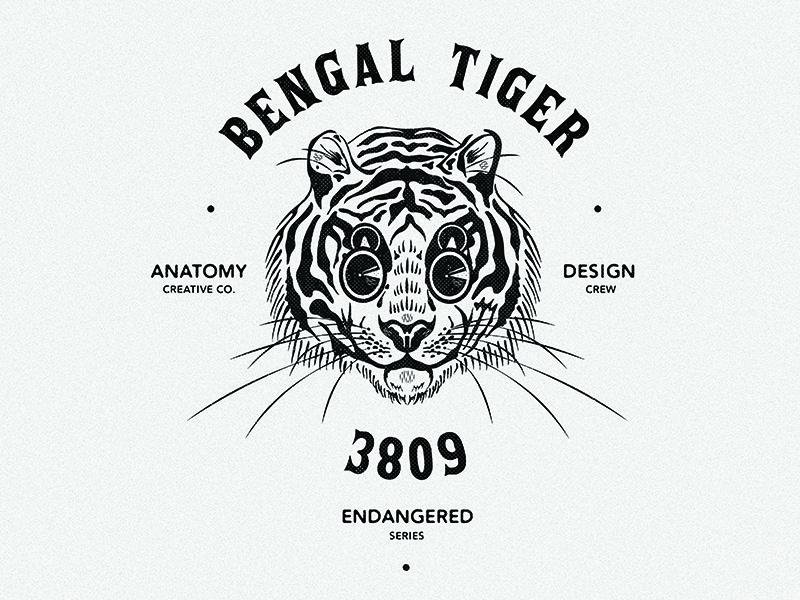 Bengal Tiger Illustration digital art graphic design typography retro tiger animals branding brand logo badge illustrator illustration