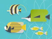 Fish Entourage