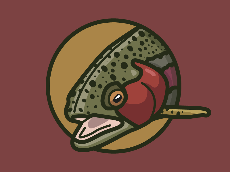 Trout Badge illustration design vector fish trout flyfishing rainbow