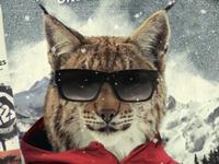 Swisscom Freeski Tour Flyer