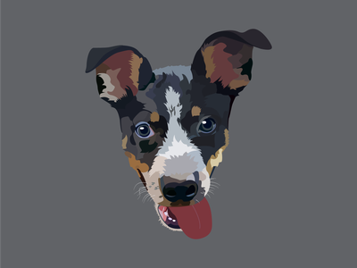 Cole the Border Heeler Portrait pet illustrator art vector illustration dogportrait pen tool pentool illustration illustrator graphicdesign graphic design design vector portrait petportrait pet portrait graphic border heeler