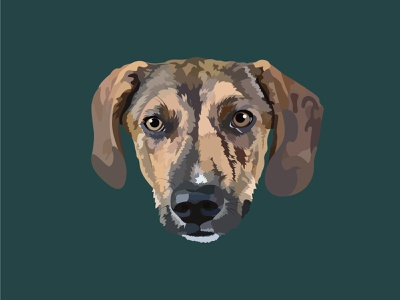 Oliver the Rescue Portrait illustrations adobe illustrator digital illustrator digital illustration digital art puppy doggy dogs illustration art dog illustration dog pet pet portrait designer graphic design vector design graphicdesign illustration illustrator