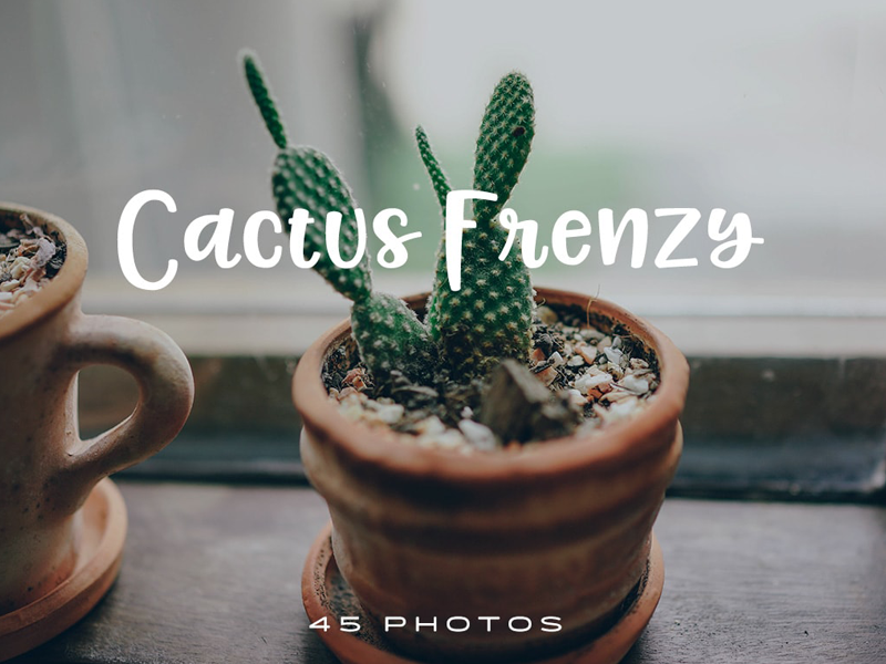45 Free Pics of Cactuses green free stock photos download photo pack plants cacti cactus