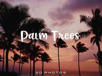 40 Free Public Domain Palm Tree Photos