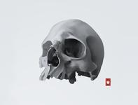 Skull skull art skull logo illustration shimur