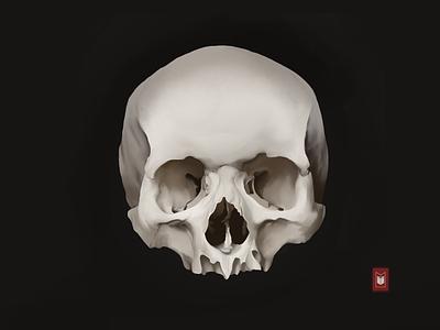 Skull skull skull art shimur illustration