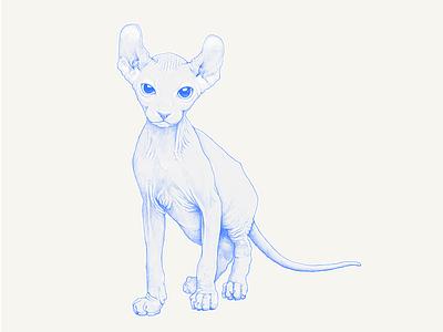 Sphynx illustration cat drawing sphynx