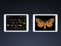 Moths App