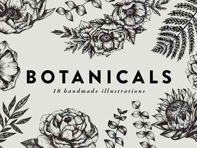 Botanicals / detailed illustrations