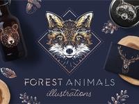 Forest Animals Illustrations