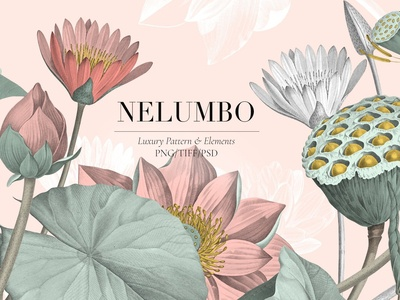 Nelumbo, Luxury Pattern & Motifs