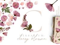 Herbarium vol. 1: Cherry Blossoms